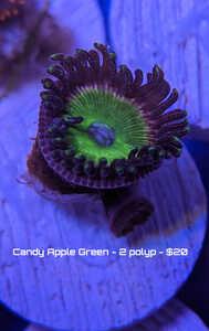 candy green 2 polyp.jpg